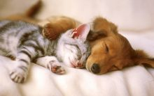Dog and cat sleeping next to each other